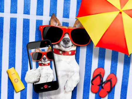 chien tenant un selfie en position couchée sur une serviette être si mignon et cool à la fois, bronzage Banque d'images