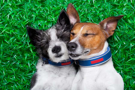 couple of dogs in love very close together lying on grass in the park photo