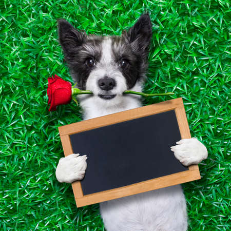 dog with rose in mouth, holding an empty blank blackboard as a banner photo