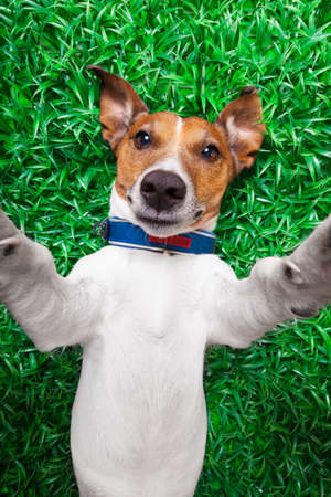 dog taking a selfie while lying on grass meadow in park photo