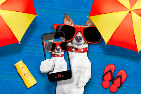 chilling: dog lying on towel under shade of umbrella relaxing and chilling out in the summer vacation taking a selfie Stock Photo