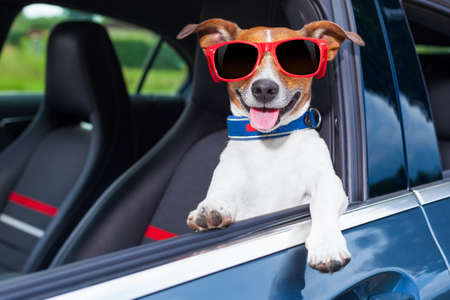 manejando: perro asomándose por la ventanilla del coche haciendo un gesto genial con gafas de sol rojas