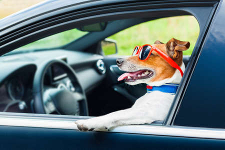 dog leaning out the car window with funny sunglasses