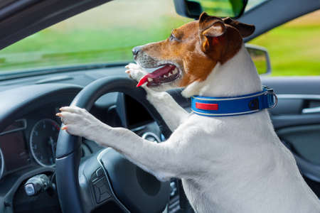 dog driving a steering wheel in a racing car photo