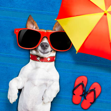 dog lying on towel under shade of umbrella relaxing and chilling out in the summer vacation photo