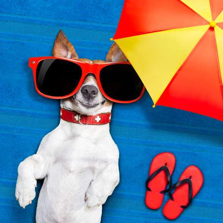 chilling out: perro acostado en una toalla bajo la sombra del paraguas relajante y relajarse en las vacaciones de verano Foto de archivo