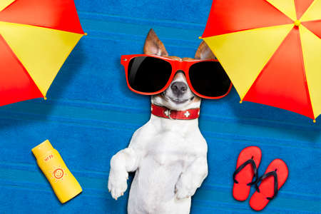 chilling out: dog lying on towel under shade of umbrella relaxing and chilling out in the summer vacation