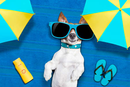 funny dogs: dog lying on towel under shade of umbrella relaxing and chilling out in the summer vacation