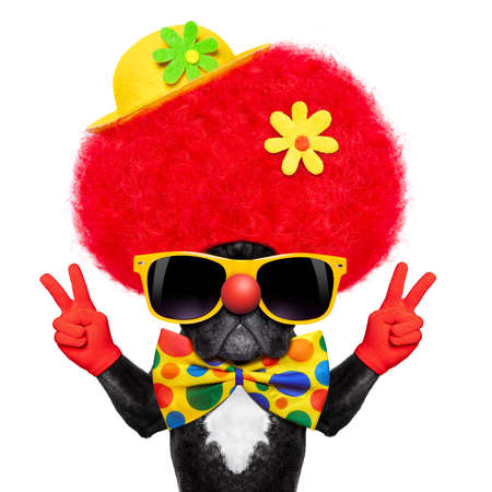 silly dog wearing clown costume with peace or victory fingers Stockfoto