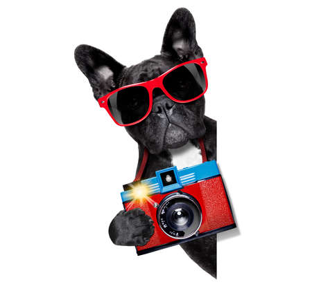 cool tourist photographer dog taking a snapshot or picture with a retro old camera photo
