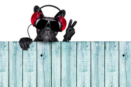 dj dog listening to music behind an empty and blank wood wall with victory and peace fingers photo