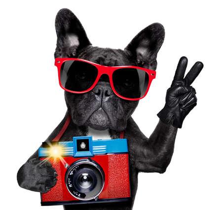 レトロ古いカメラでスナップショットや画像を撮影クールな観光写真家犬 写真素材