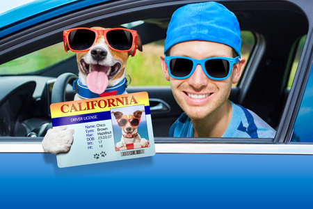 dog in a car looking through window with Driving instructor showing  the drivers license