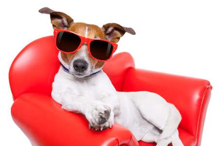 개는 편안한 빨간 소파에 앉아 재미입니다 동안 휴식