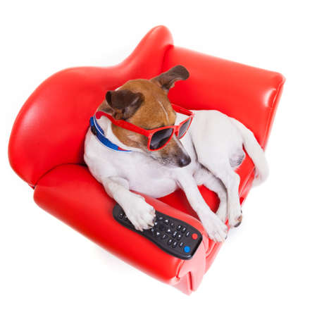 zapping: dog watching tv or a movie sitting on a red sofa or couch  with remote control changing the channels