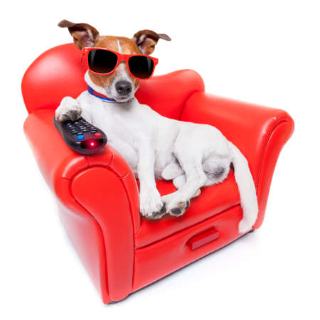 boring: dog watching tv or a movie sitting on a red sofa or couch  with remote control changing the channels
