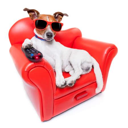 Pes sledování televize nebo filmu sedí na červené pohovce nebo gauči s dálkovým ovládáním měnící se kanály
