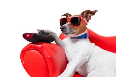 Cane guardando la tv o un film seduto su un divano rosso o divano con il telecomando cambiando i canali Archivio Fotografico - 30697613