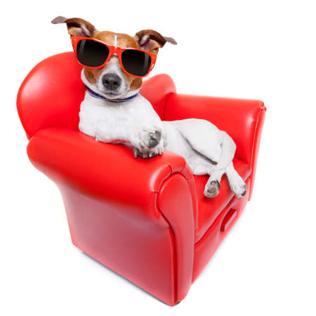 télé: chien assis sur le canapé rouge de détente et de repos tout en se détendre Banque d'images