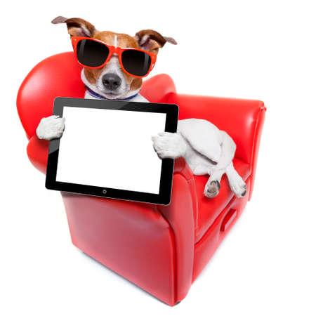 perro celebración de una computadora tablet pc en blanco y vacío en un sofá divertido rojo de lujo, descanso y relax