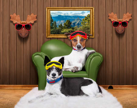 love couple of dogs sitting on a sofa with ski goggles warming up in winter lodge  or hut in the alps mountains photo