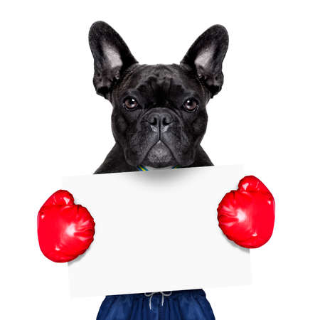 dog as  boxing trainer with gold medal wearing big red  boxing gloves holding a white blank placard or banner photo