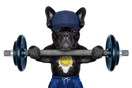 dog as personal trainer with gold medal lifting a dumbbell bar wearing a blue cap Stock Photo