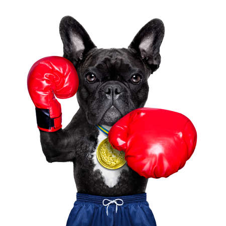 dog as  boxing trainer with gold medal wearing big red  boxing gloves