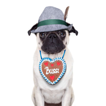 octoberfest: Pug dog dressed up as bavarian with gingerbread as collar Stock Photo