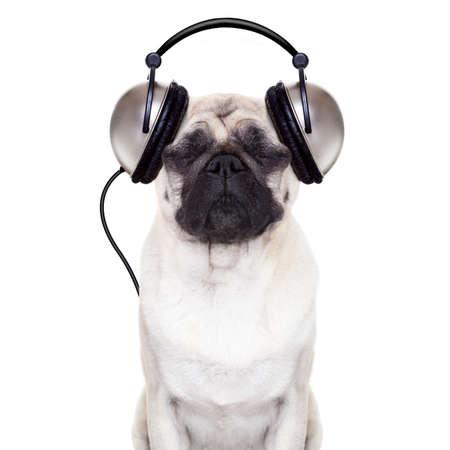 zvířata: mops pes poslouchá hudbu se zavřenýma očima