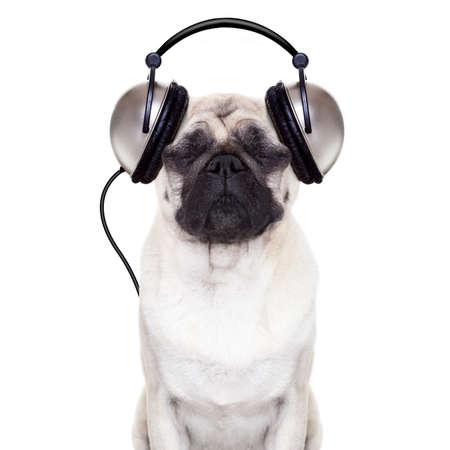animal eye: pug dog listening to music with  eyes closed