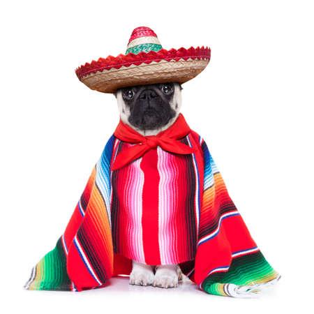 perro mexicano con sombrero y un gran poncho