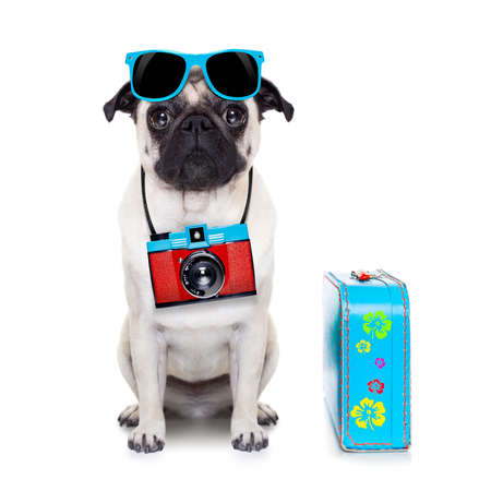 pug dog looking so cool with fancy sunglasses  and photo camera