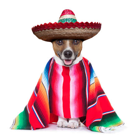 mexicans: mexican dog with sombrero and a big poncho