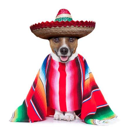 traje mexicano: perro mexicano con sombrero y un gran poncho