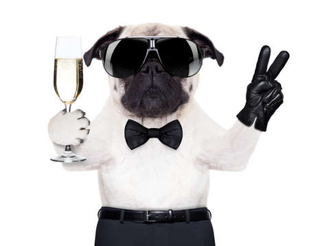pug with a  champagne glass and victory or peace fingers toasting for new year photo