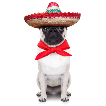 mexican dog with big sombrero hat and red tie Standard-Bild