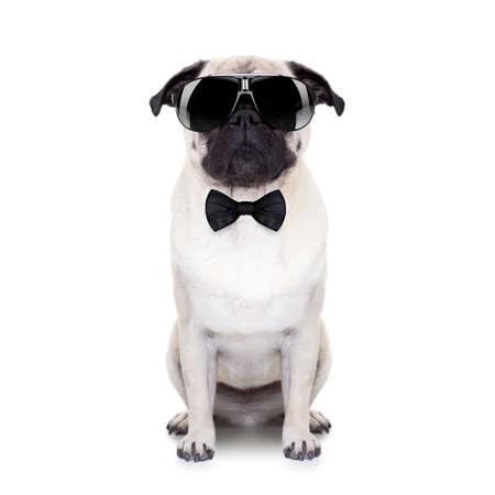perro pug mirando tan cool con gafas de sol de lujo y un pequeño lazo negro Foto de archivo