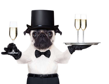 pug with a  champagne glass holding a service tray with two glasses , holding one glass on the other hand photo