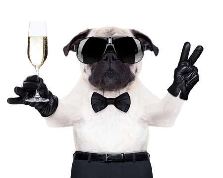Mops z lampką szampana i zwycięstwa lub pokojowych palców opiekania na nowy rok, patrząc tak fajne