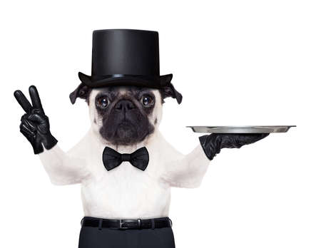 cool pug with gloves and black hat holding an empty service tray ,fingers in peace or victory gesture photo
