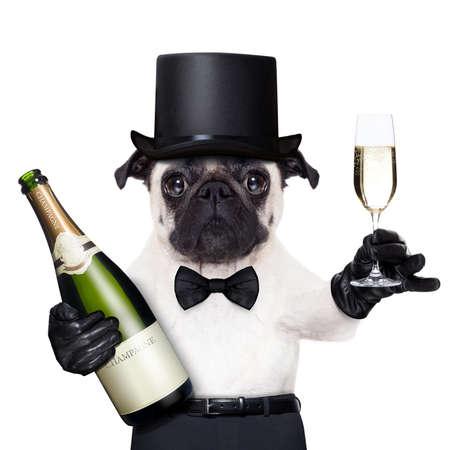 dog: 샴페인 글래스와 새로운 년 이브에 토스트 반대편에 병 퍼그 스톡 사진