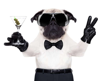 cool pug dog with martini glass and peace or victory fingers, photo