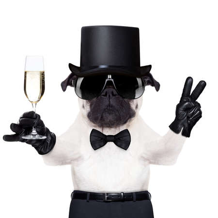 refreshment: pug with a  champagne glass and victory or peace fingers toasting for new year wearing a black hat