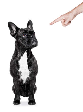 dog being punished by his owner with finger pointing out him, isolated on white background photo