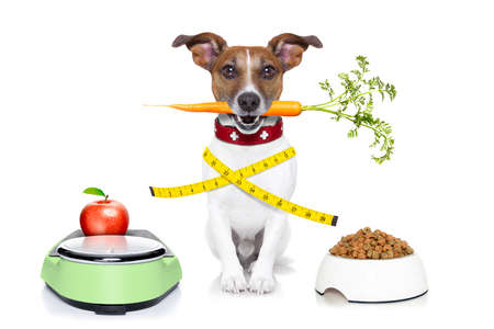healthy dog on scale with carrot and measuring tape around waist isolated on white background photo