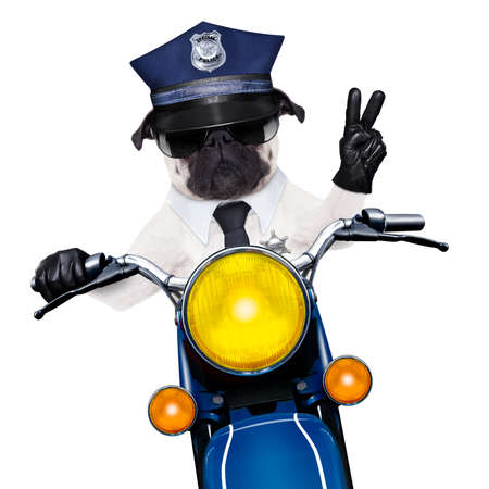 patrolling: pug police dog on motorbike patrolling the street with peace or victory finger wearing cool sunglasses isolated on white background Stock Photo