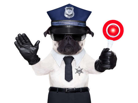 under arrest: POLICE DOG ON DUTY WITH stop sign and hand , isolated on white blank background Stock Photo