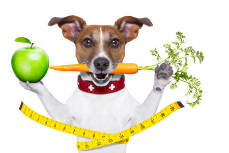 healthy dog  with carrot in mouth and measuring tape around waist isolated on white background and a green apple photo