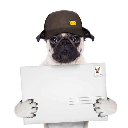 postman: postman pug  dog delivering a big white blank empty envelope